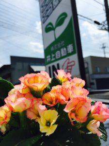 緑と花で気持ちの良い空間作りに努めています